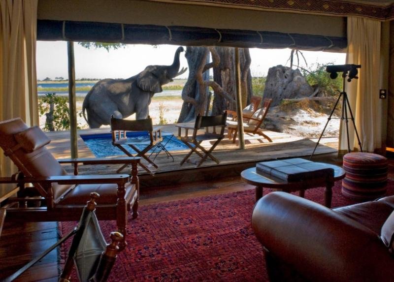 An elephant playing right outside the patio area of a safari lodge